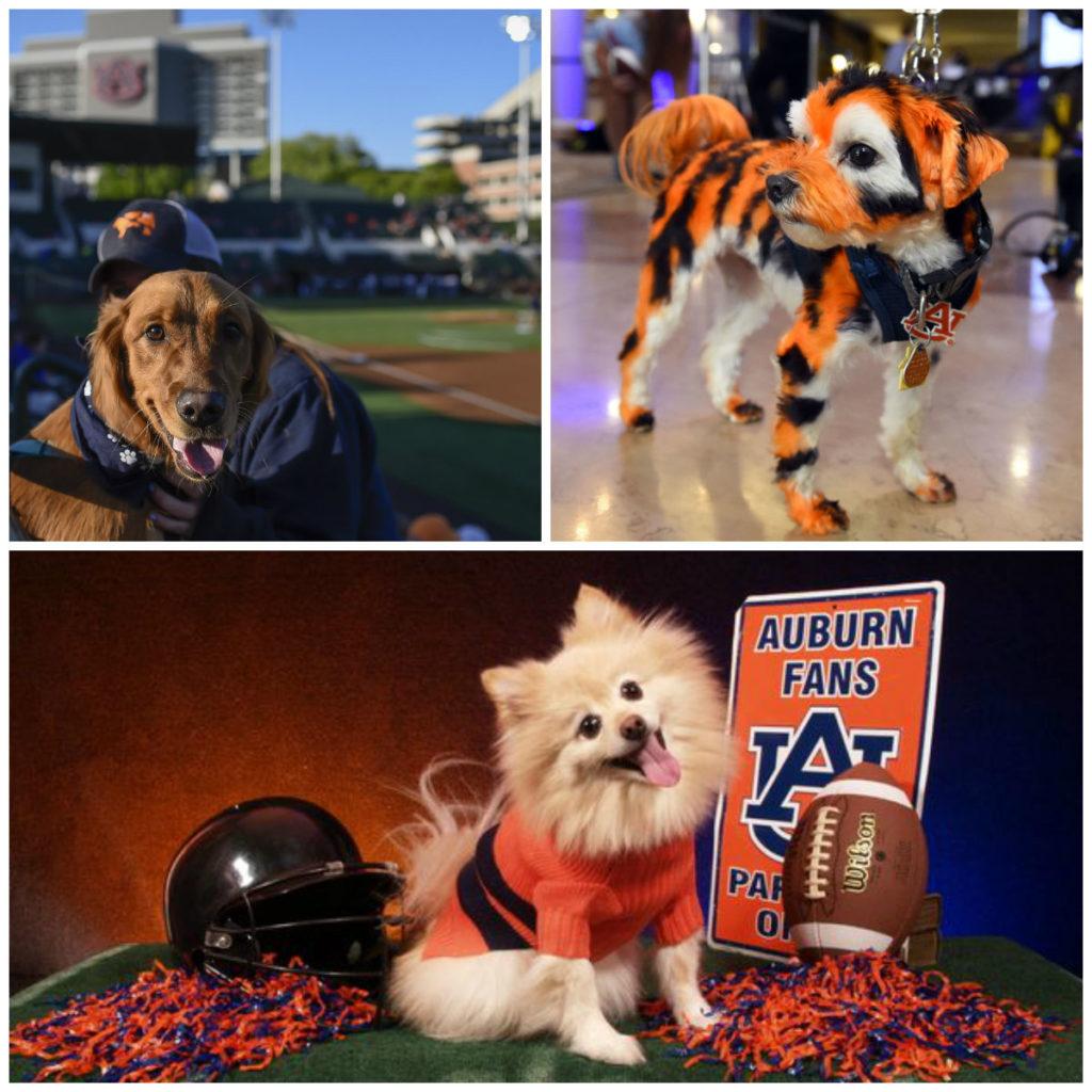 Chiens fans des Auburn Tigers