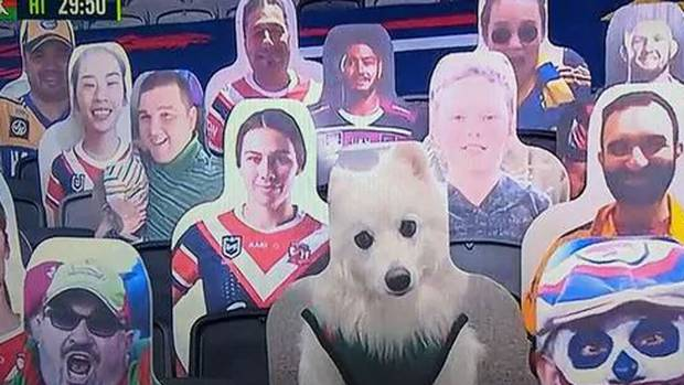 cardboard cut out NRL